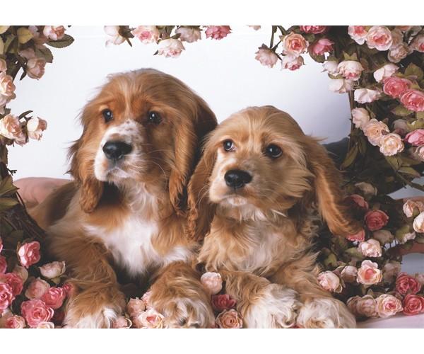 K.Color 39*49 500 Lü Yapboz Köpekler Ve Güller